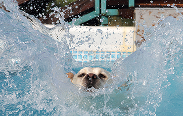 5 Great Ways to Keep Your Dog Safe Around Water